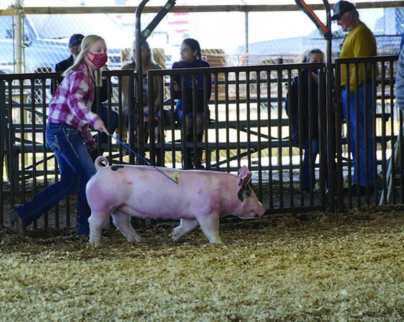 Rilyn Lauing, DeRidder Junior High, shows in the market hog class.